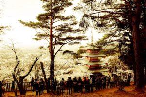 桜と五重塔(白)