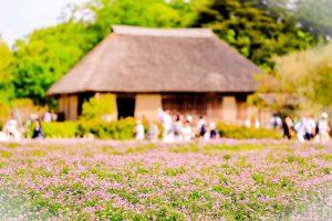 古民家と花畑