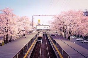 小田急線の駅と桜並木