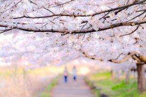 桜並木を歩く2人