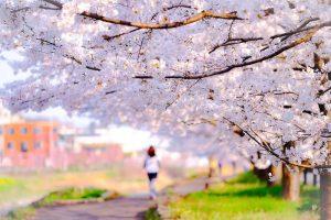 桜並木と歩く女性