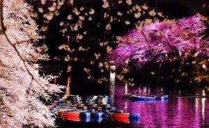 桜とボート