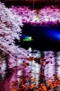 ぶれた桜の写真