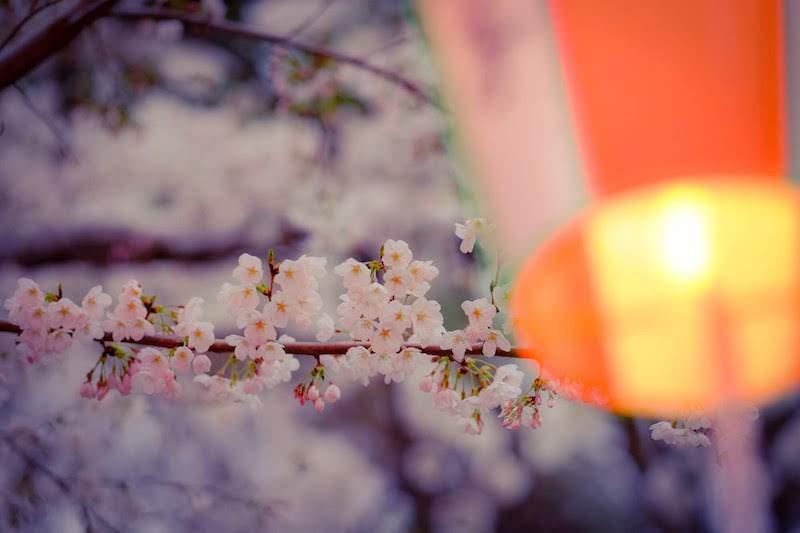 [写真日記]うえの桜まつりと海月