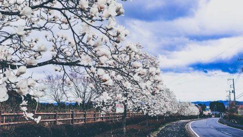[写真日記]秦野戸川公園とひまわりとPS4 PROのSSD