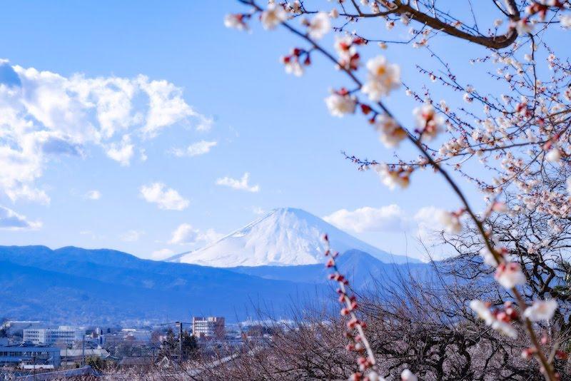 [写真日記]富士山と梅とかこそらと雨