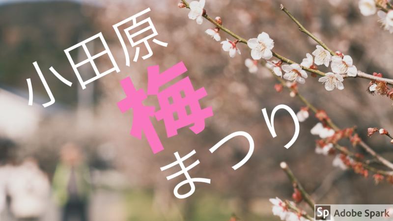 [写真日記]小田原梅まつりの動画の話。