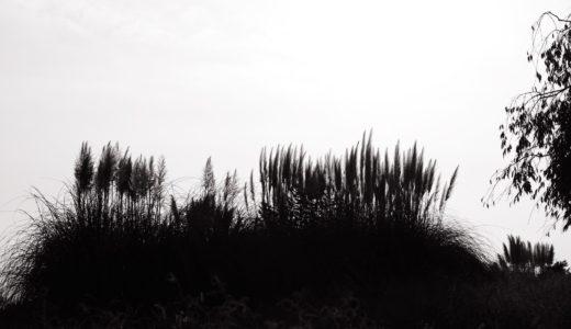 [写真]昭和記念公園X-Pro3モノクロ