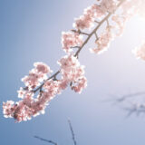 【CB250R】2月の湘南平で富士山と梅と桜[X-Pro3]